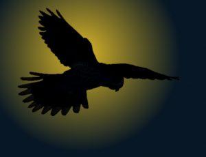 Nacht-Falke